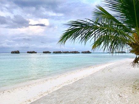 Maldives, Island, Beach, Sea, Palm, Indian Ocean