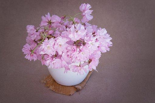 Flowers, Pink, Pink Flower, Branches, Krischblüten