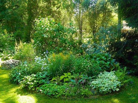 Garden, Yard, Plants, Small, Summer