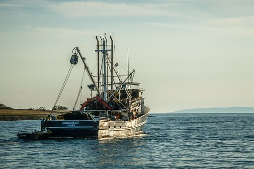 Fishing Boat, Fish, Fishing, Schiffer Boat, Phased Out