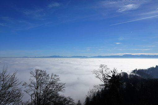 Forest, Sun, Uetliberg, Zurich, Fog, Nature, Winter