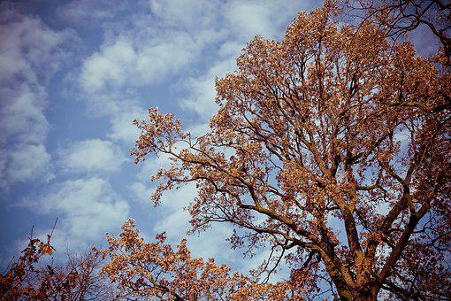 Tree, Landscape, Nature, Forest, Sky, Grove, Clouds
