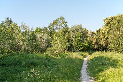 Path, Forest, Nature, Trees, Park, Landscape, Summer