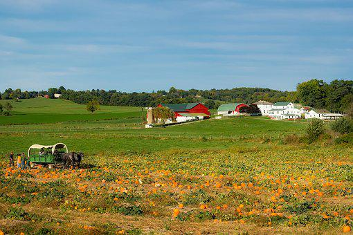 Ohio, Farm, Amish, Horse, Wagon, Pumpkins, Crop, Fall