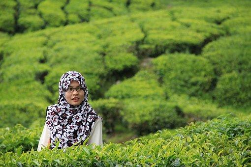 Tea, Woman, Hijab, Young, Cameron, Plantation, Green