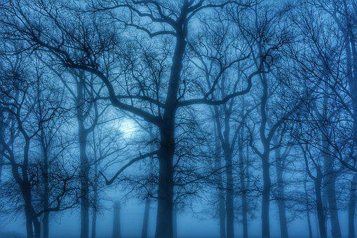 Fog, Trees, March, Blue, Haze, Moody, Ethereal, Woods