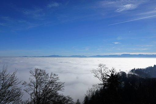 Forest, Sun, Uetliberg, Zurich