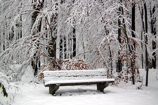 Hertogenwald, Snow, Bench