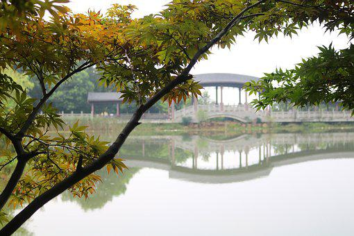 The Scenery, Bridge, Lake, Chongqing