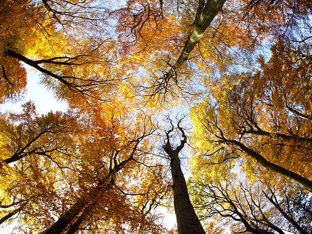 Tree, Crown, Foliage, Sun, Autumn