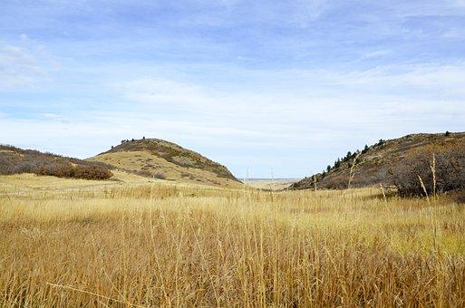 Denver, Fall Color, Plain, Field, Landscape, Dry, Grass