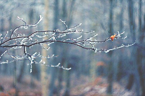 Winter, M42, Branch, Sheet, Frost, Forest, Icing, One