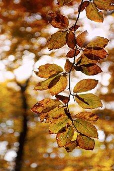 Beech, Autumn, Leaves, Foliage, Sun, Bokeh, Light