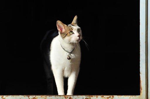 Pet, Animal, Mammals, Dog, Cute, Look, Loving, Friend