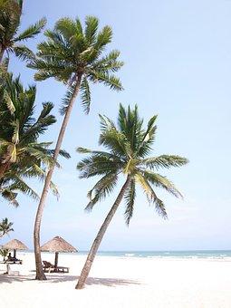 Palm Tree, Sea View, Beach, White Sands, Take, Summer