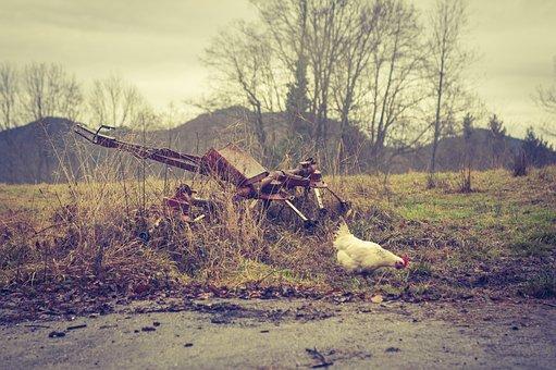 Hen, Chicken, Poultry, Animal, Livestock, Chickens