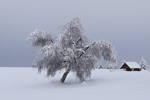 Mountains, Winter, Snow, Tree, Landscape, Snowy, Nature