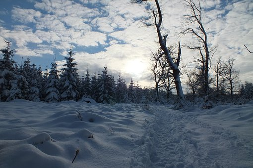 Hertogenwald, Snow, Sun, Winter, Evening, Trail