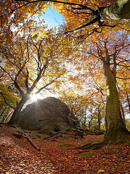 Forest, Autumn, Rock, Sun, Stone, Nature, Sky, Rocks