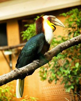 Toucan, Bird, Colorful