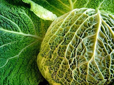 Savoy, Kohl, Vegetables, Healthy, Savoy Cabbage, Eat
