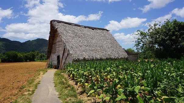 Cuba, Vinales, Plantation, Tobacco, Cigar