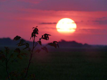 Sun, West, In The Evening, Pinl Sky, Silhouettes