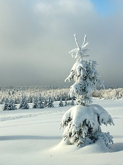 Winter, Sapling, Christmas Landscape, Mountains