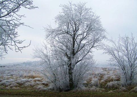 Winter Landscape, Hoary, Rimy, Frost, Wood, Winter
