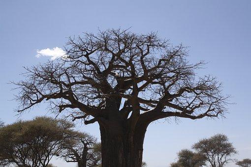 Africa, Jungle, Taranguire