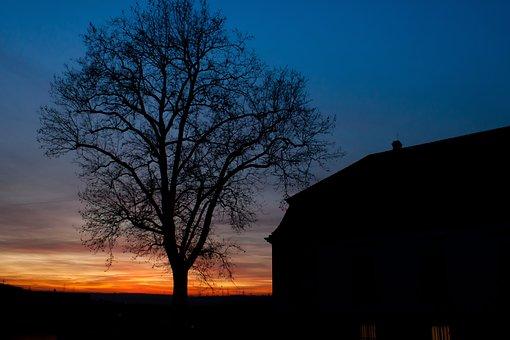 Sunset, Marbach, Tree, Silhouette