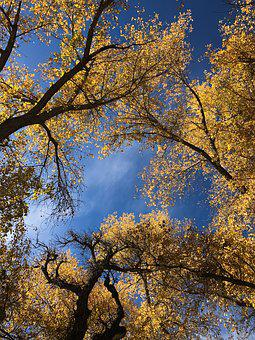 Colorado, Autumn, Trees, Autumnal, Changing Leaves