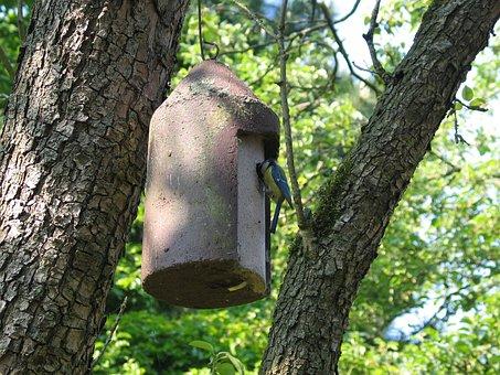Blue Tit, Nest Box, Pimpeltje