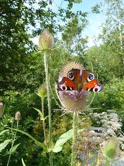 Wicket Kart Bun, Kart Bun, Butterfly