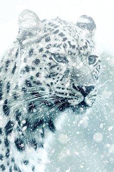 Leopard, Cheetah, Animal, Cat, Big Cat, Carnivores