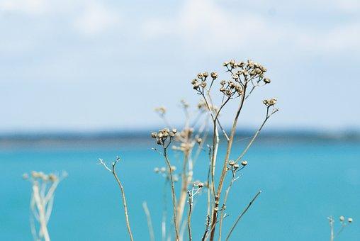 Lake, Flower, Water, Blue, Erfurt, Gravel Pit, Nature