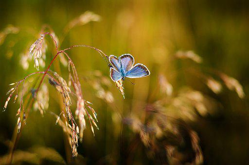 Butterfly, Insects, Blue Wings, Colored, Nature, Summer