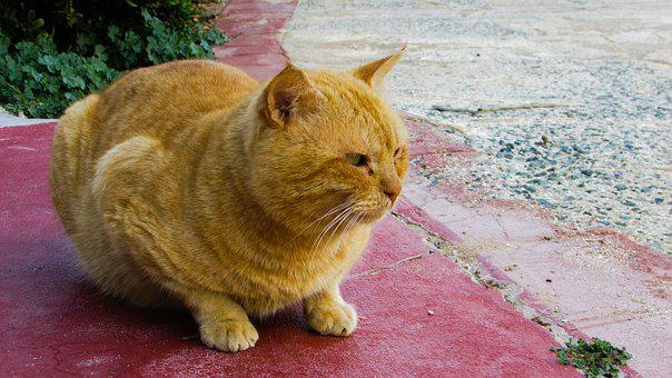Cat, Stray, Red, Animal, Street, Cute, Adorable