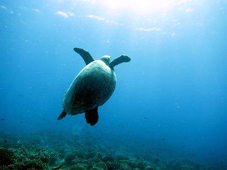 Sea, Turtle, Diver
