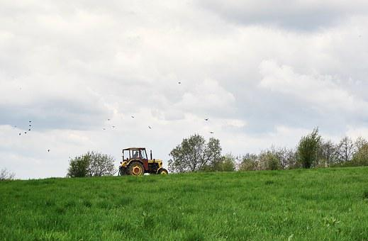 Tractor, Birds, Meadow, Agricultural Machine