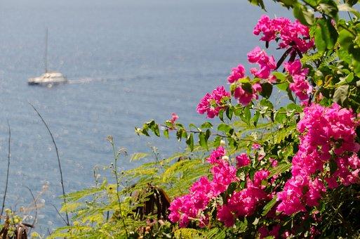 Triple Flower, Bougainvillea, Botanical, Garden