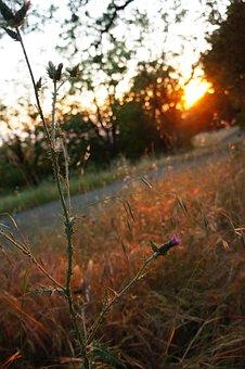 Sunset, Nature, Sunlight, Sun Ray, Sunrise, Evening
