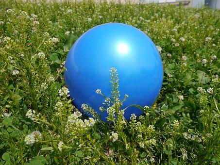 Blue Ball, Rengeso, Ragweed, Astragalus, Blue, Green