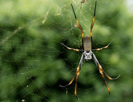 Spider, Trap, Closeup, Wet, Natural, Green