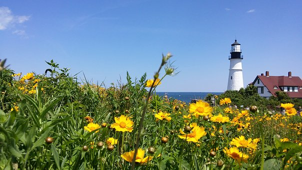 Coreopsis, Lanceolata, Lanceleaf, Lighthouse, Beacon