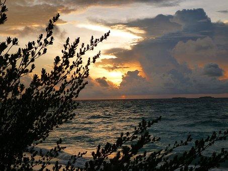 Sunrise, Silhouettes, Dark, Trees, Leaves, Plants