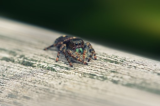 Little Spider, Macro, Tiny, Spider, Nature, Little