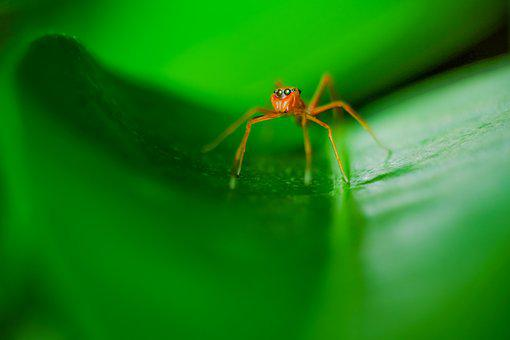 Spider, Green, Macro, Nature, Color, Insect, Natural