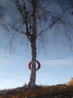 Mirror Image, Water, Birch, Tree, Buoy, Reflection