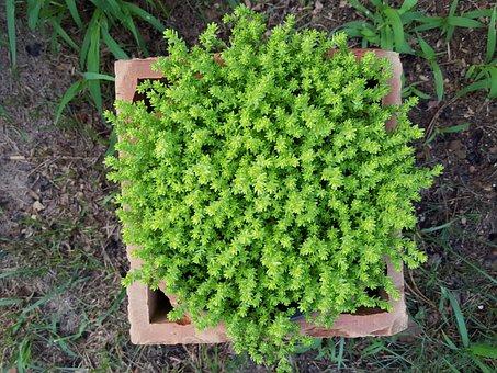 Plant In A Pot, Garden, Green, Nature, A Garden Plant